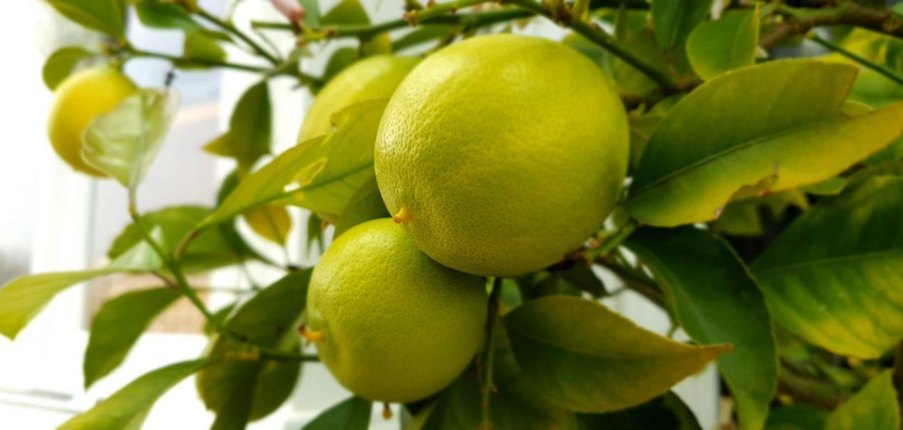 Zitronen machen lustig Gesunde Ernährung bei Diabetes Erftstadt